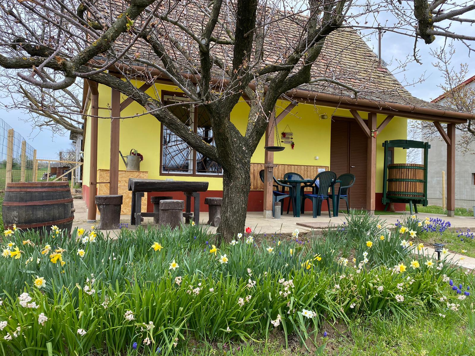 zomer Wijnhuis 6 Vakantie Woning Hongarije